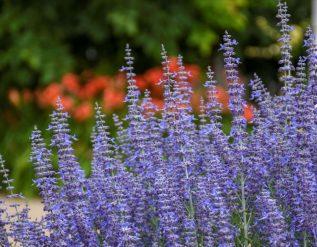 brian-minter-heat-tolerant-perennials-give-gardens-some-summer-sizzle