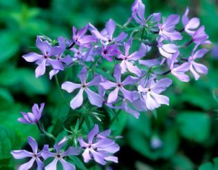 the-best-perennials-to-start-from-seed-for-your-region