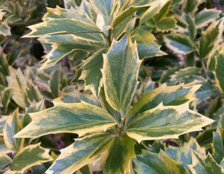 unusual-plants-for-winter-interest