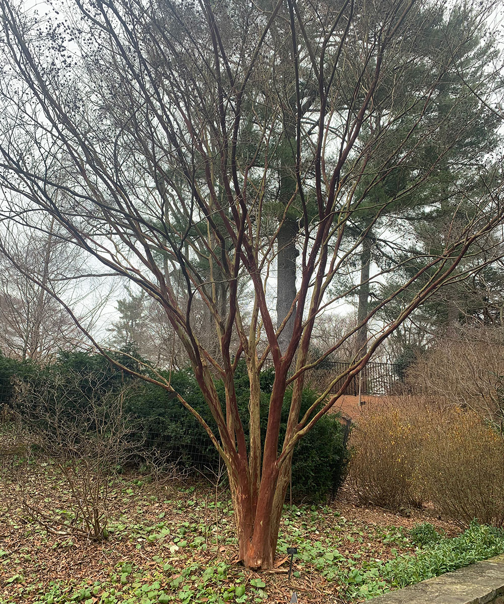 structural-plants-for-enduring-winter-interest-in-the-mid-atlantic