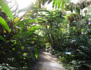 in-the-greenhouse-at-the-missouri-botanical-garden