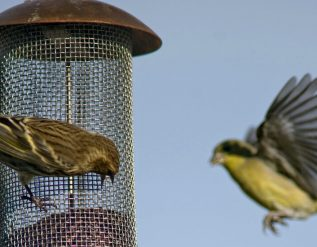 salmonella-outbreak-is-linked-to-wild-birds-and-feeders-c-d-c-says