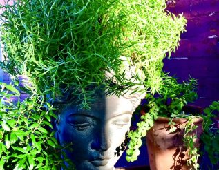 jojos-lancaster-garden-finegardening
