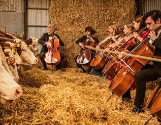 when-the-cellos-play-the-cows-come-home