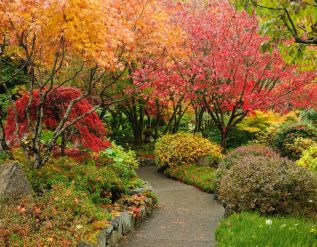 healing-gardens-lets-you-book-private-gardens-in-california