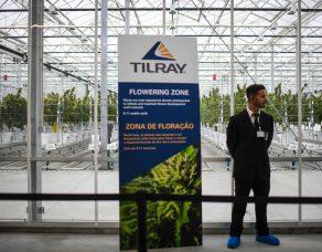 tilray-stock-rallies-on-pot-distribution-agreement-with-grow-pharma