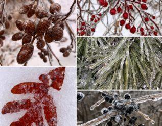 marias-winter-beauty-finegardening