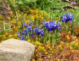 robins-ohio-garden-finegardening