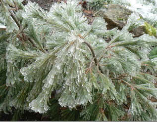 beauty-and-the-beast-in-a-winter-garden