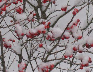 winter-interest-in-indiana-finegardening