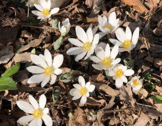 carlas-spring-garden-part-1