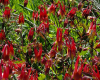wildflowers-from-staten-island-finegardening