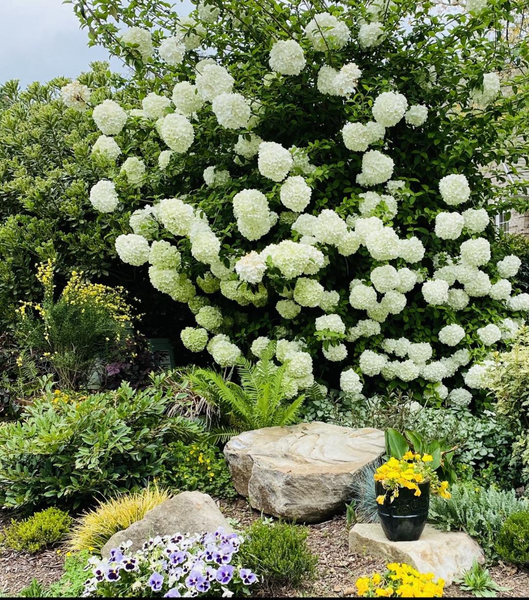 marys-north-carolina-garden-finegardening