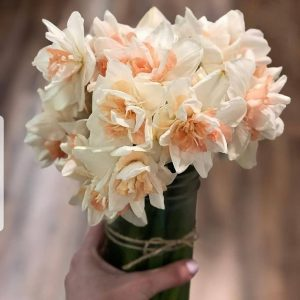 Bouquet of double peach daffodils