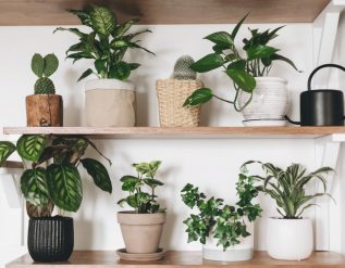 houseplant-company-outside-in-launches-plant-giveaway
