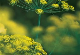 15-great-herbs-to-start-from-seed