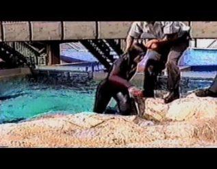 cnn-films-blackfish-the-truth-behind-orcas-in-capt
